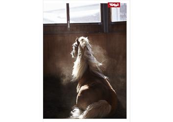 Poster Pferd