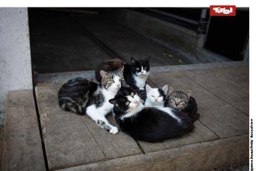 Poster Flecklhof, Katzen